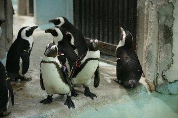 penguin110517.JPG